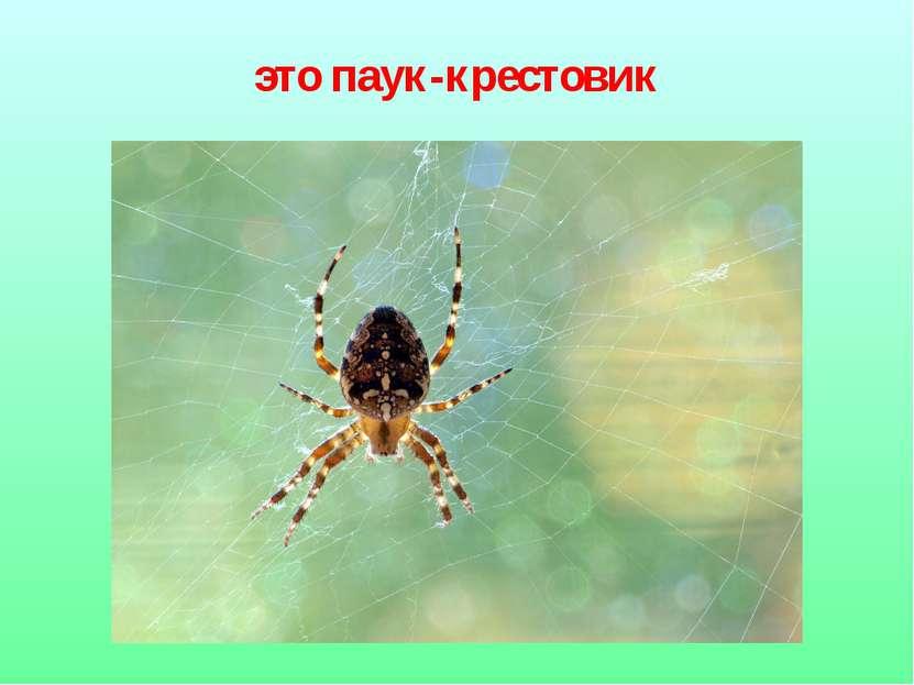 это паук-крестовик