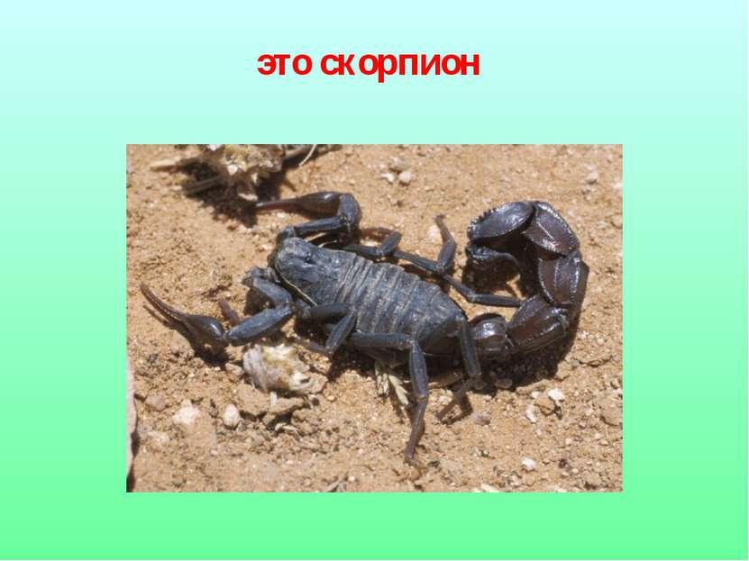 это скорпион
