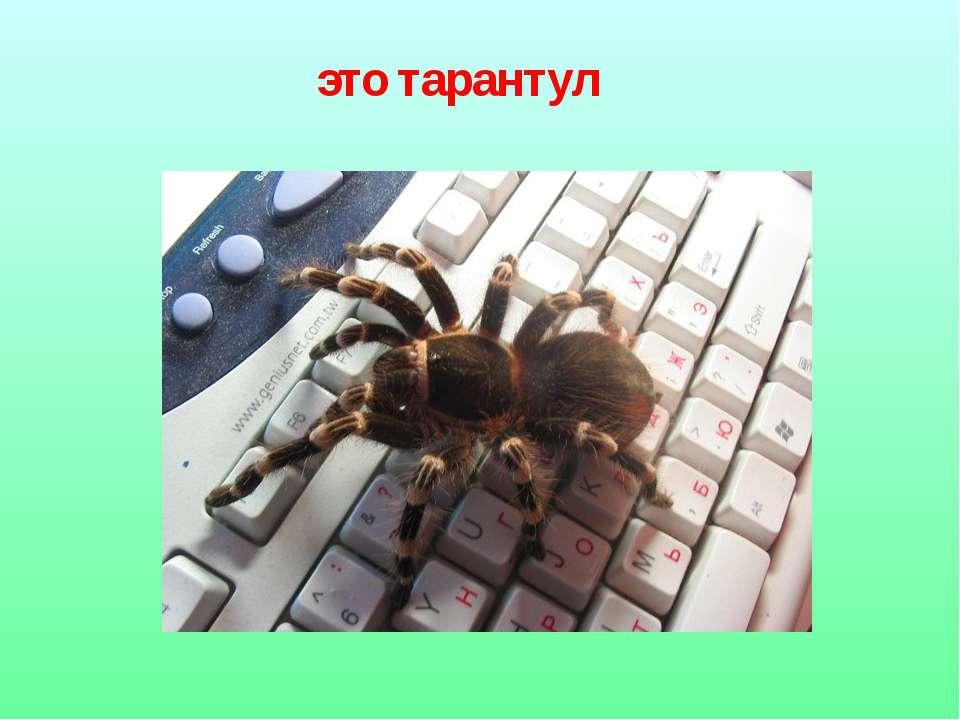 это тарантул