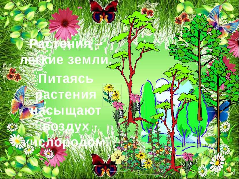 Растения – легкие земли. Питаясь растения насыщают воздух кислородом.
