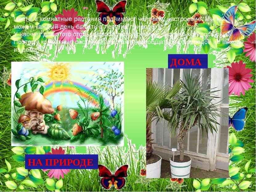 Цветы и комнатные растения поднимают человеку настроение. Мы не можем каждый ...