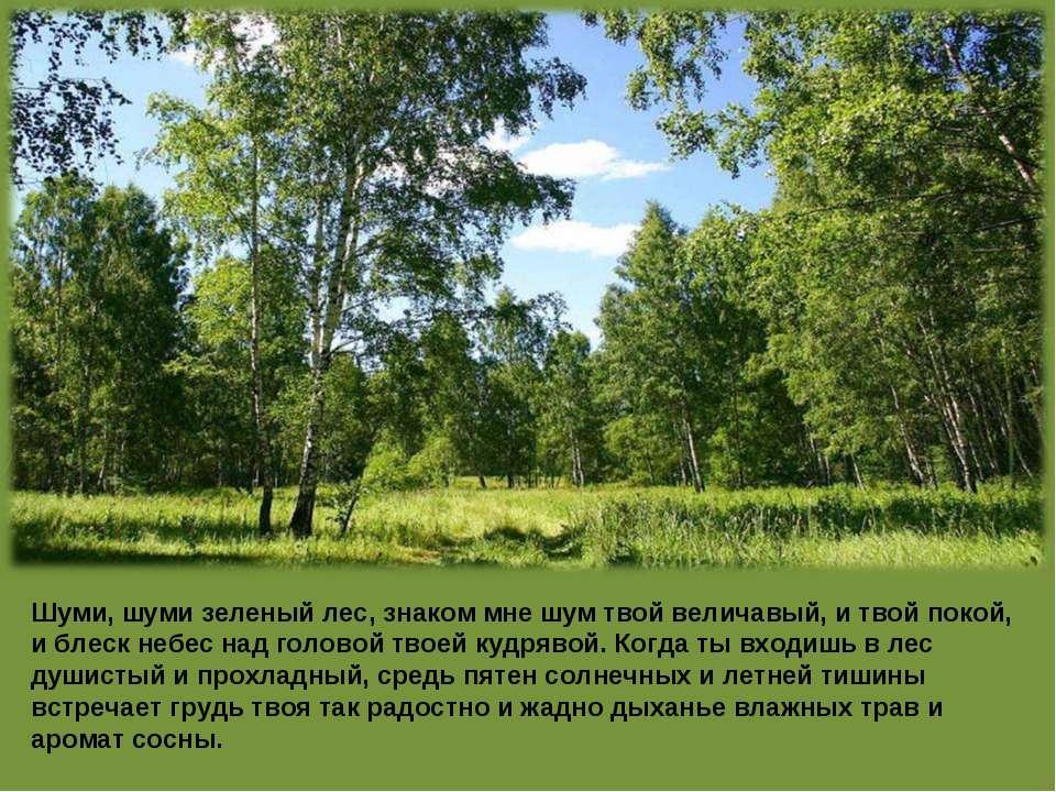 Шуми, шуми зеленый лес, знаком мне шум твой величавый, и твой покой, и блеск ...