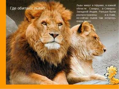 Где обитают львы? Львы живут вАфрике, вюжной области Сахары, вСеверно-Запа...