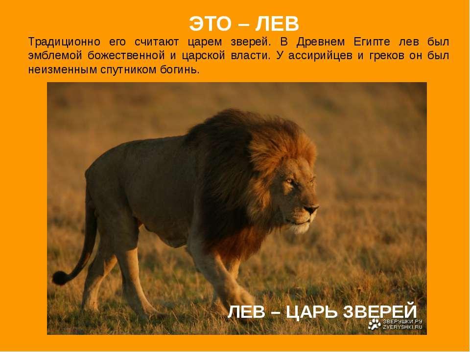 ЛЕВ – ЦАРЬ ЗВЕРЕЙ Традиционно его считают царем зверей. В Древнем Египте лев ...