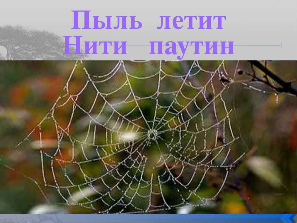 Пыль летит Нити паутин