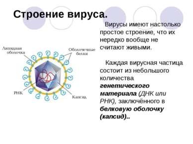 Строение вируса. Вирусы имеют настолько простое строение, что их нередко вооб...