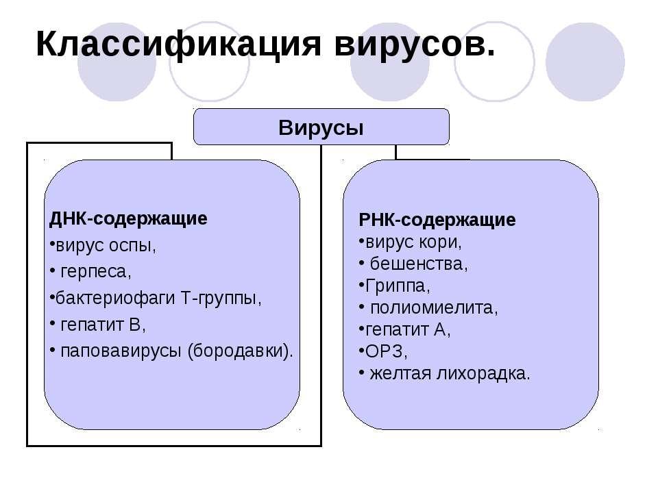 Классификация вирусов.
