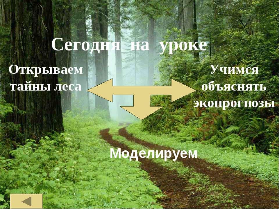 Сегодня на уроке Моделируем Открываем тайны леса Учимся объяснять экопрогнозы