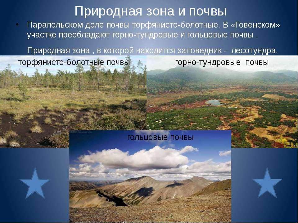 Природная зона и почвы Парапольском доле почвы торфянисто-болотные. В «Говенс...
