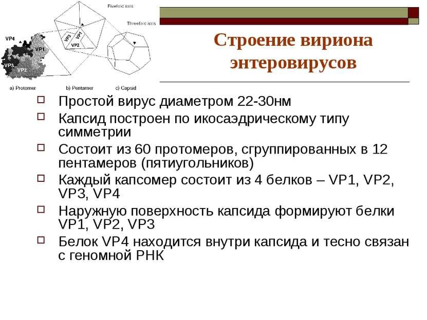 Строение вириона энтеровирусов Простой вирус диаметром 22-30нм Капсид построе...