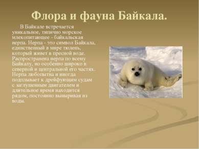 Флора и фауна Байкала. В Байкале встречается уникальное, типично морское млек...