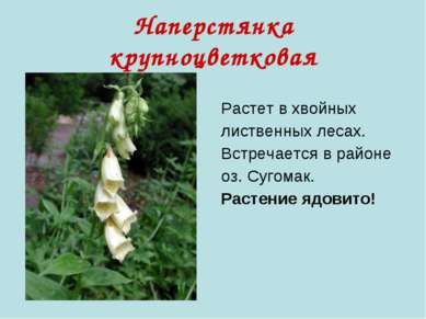 Наперстянка крупноцветковая Растет в хвойных лиственных лесах. Встречается в ...