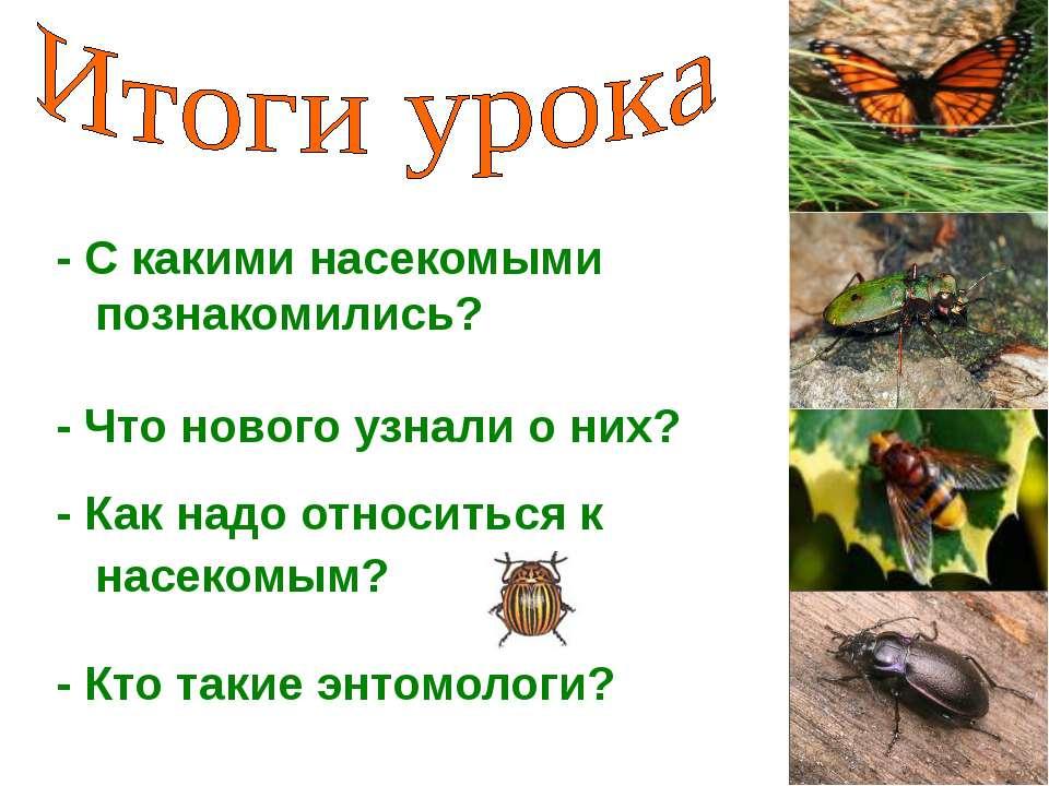- С какими насекомыми познакомились? - Что нового узнали о них? - Как надо от...