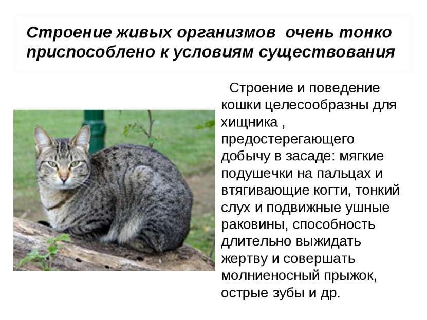 Строение и поведение кошки целесообразны для хищника , предостерегающего добы...