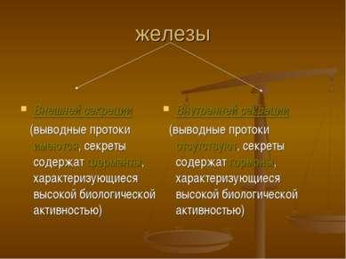железы Внешней секреции (выводные протоки имеются, секреты содержат ферменты,...
