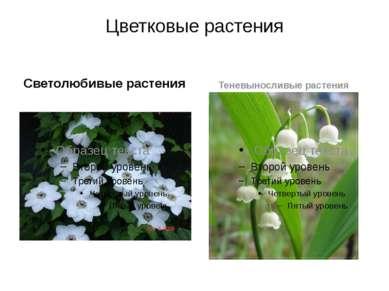 Цветковые растения Светолюбивые растения Теневыносливые растения