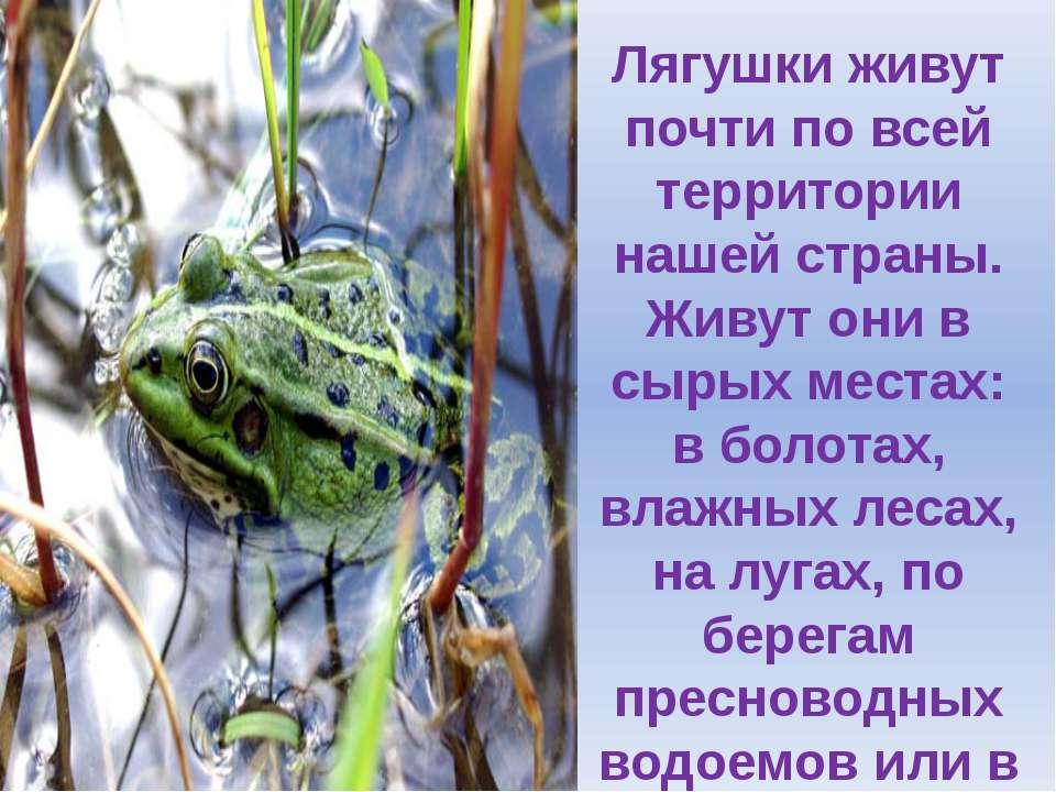 Лягушки живут почти по всей территории нашей страны. Живут они в сырых местах...