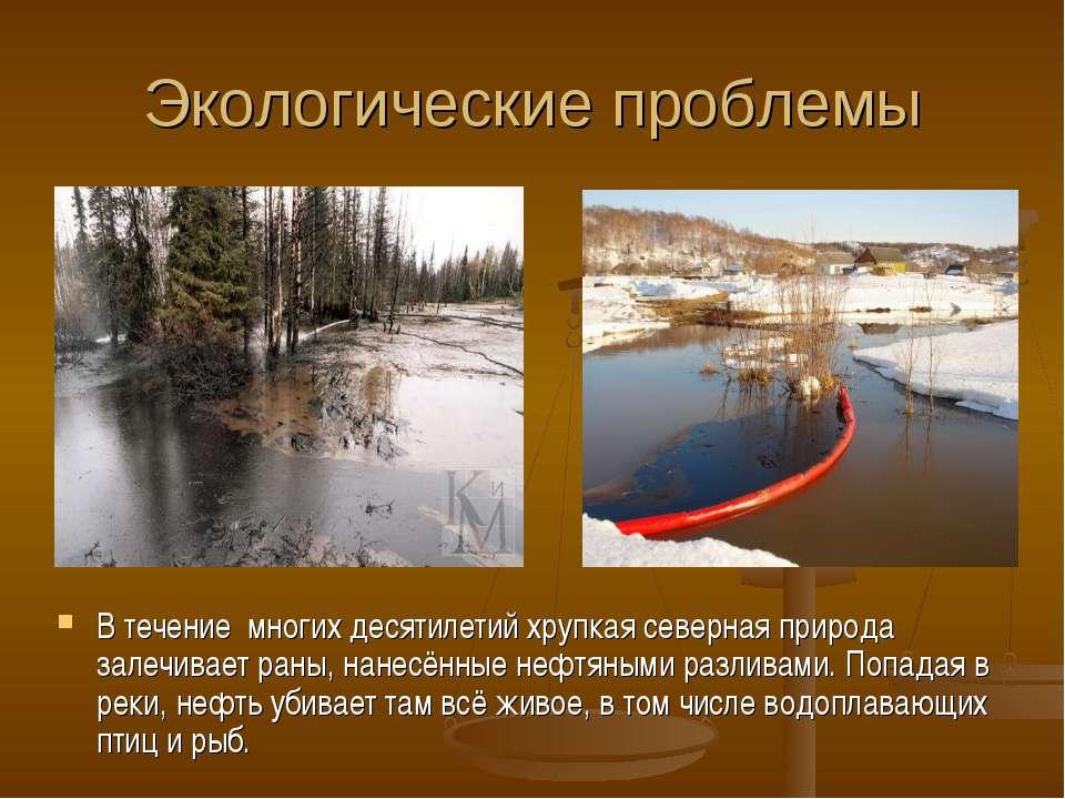 Экологические проблемы В течение многих десятилетий хрупкая северная природа ...