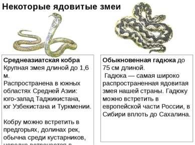 Среднеазиатская кобра Крупная змея длиной до 1,6 м. Распространена в южных об...