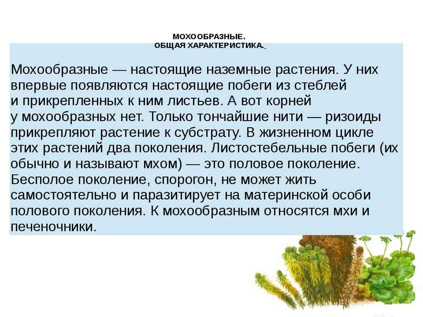 МОХООБРАЗНЫЕ. ОБЩАЯ ХАРАКТЕРИСТИКА. Мохообразные— настоящие наземные растени...