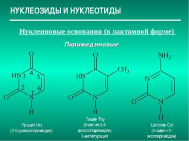 НУКЛЕОЗИДЫ И НУКЛЕОТИДЫ Нуклеиновые основания (в лактамной форме) Пиримидинов...