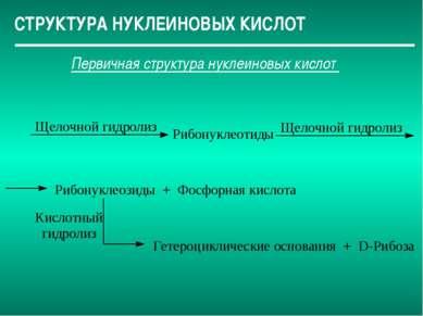 СТРУКТУРА НУКЛЕИНОВЫХ КИСЛОТ Первичная структура нуклеиновых кислот