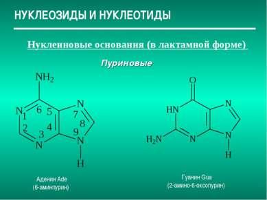 НУКЛЕОЗИДЫ И НУКЛЕОТИДЫ Нуклеиновые основания (в лактамной форме) Пуриновые А...