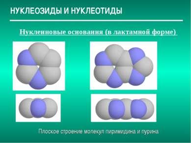 НУКЛЕОЗИДЫ И НУКЛЕОТИДЫ Нуклеиновые основания (в лактамной форме) Плоское стр...