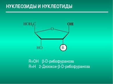 НУКЛЕОЗИДЫ И НУКЛЕОТИДЫ R=OH -D-рибофураноза R=H 2-Дезокси- -D-рибофураноза