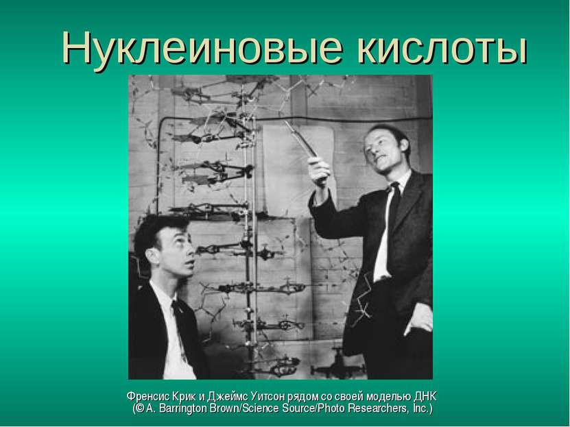 Нуклеиновые кислоты Френсис Крик и Джеймс Уитсон рядом со своей моделью ДНК (...