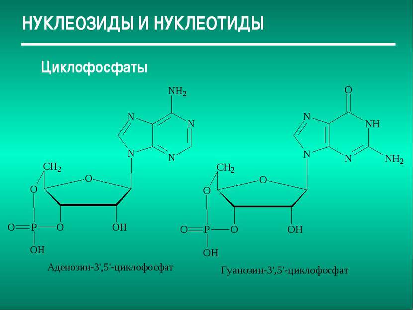 НУКЛЕОЗИДЫ И НУКЛЕОТИДЫ Циклофосфаты