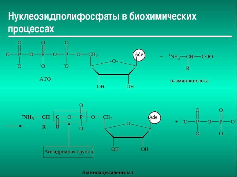 Нуклеозидполифосфаты в биохимических процессах