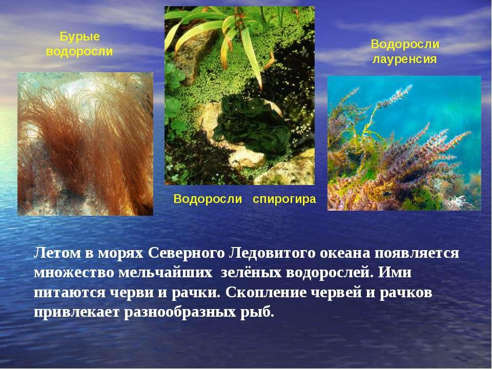 водоросли в арктике картинки
