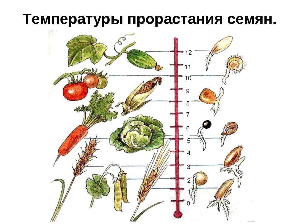 Температуры прорастания семян.