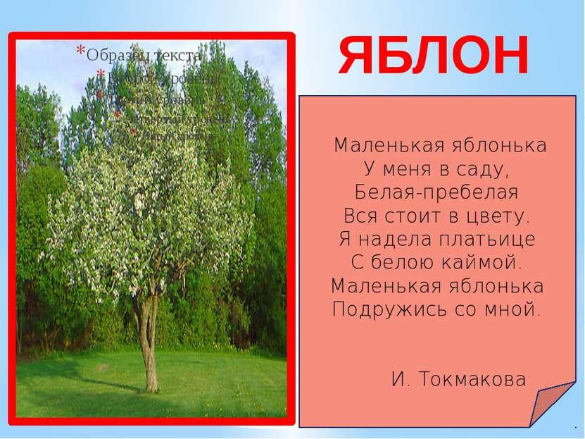 ЯБЛОНЯ Маленькая яблонька У меня в саду, Белая-пребелая Вся стоит в цвету. Я ...