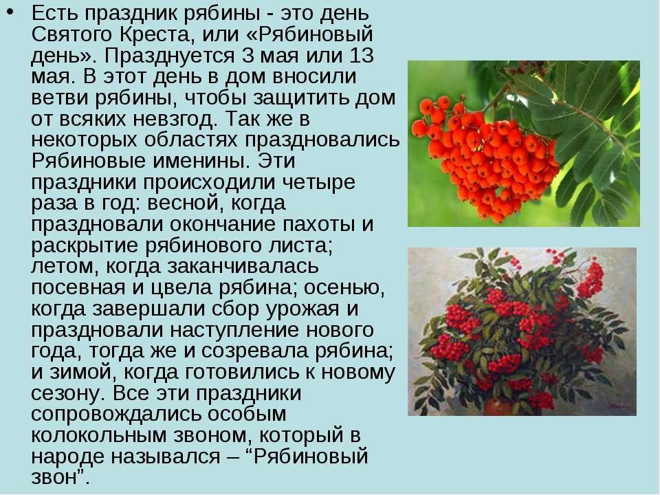 Есть праздник рябины - это день Святого Креста, или «Рябиновый день». Праздну...