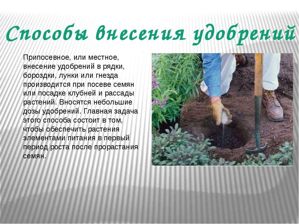 Способы внесения удобрений Припосевное, или местное, внесение удобрений в ряд...