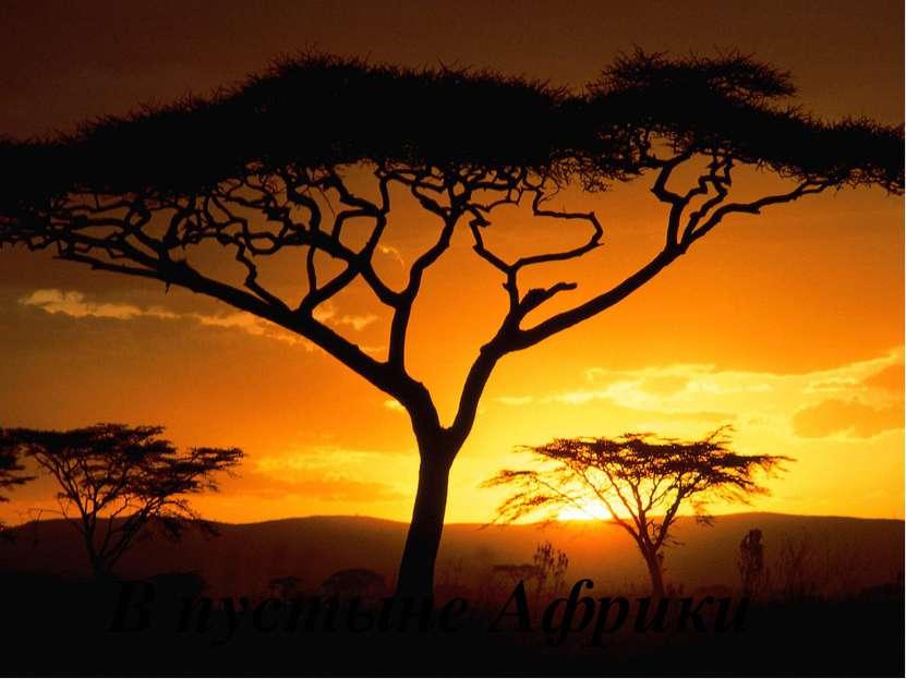 В пустыне Африки