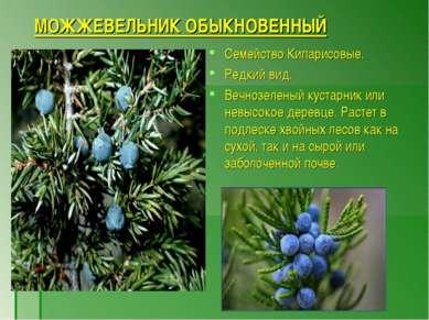 МОЖЖЕВЕЛЬНИК ОБЫКНОВЕННЫЙ Семейство Кипарисовые. Редкий вид. Вечнозеленый кус...