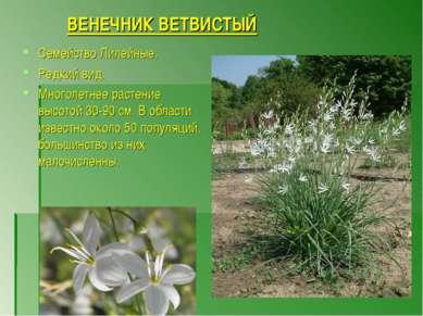 ВЕНЕЧНИК ВЕТВИСТЫЙ Семейство Лилейные. Редкий вид. Многолетнее растение высот...