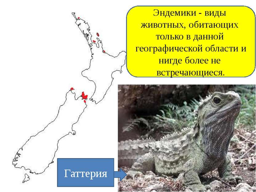 Реликтовый ареал Эндемики - виды животных, обитающих только в данной географи...