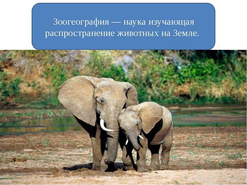 Зоогеография — наука изучающая распространение животных на Земле. Изучение ар...