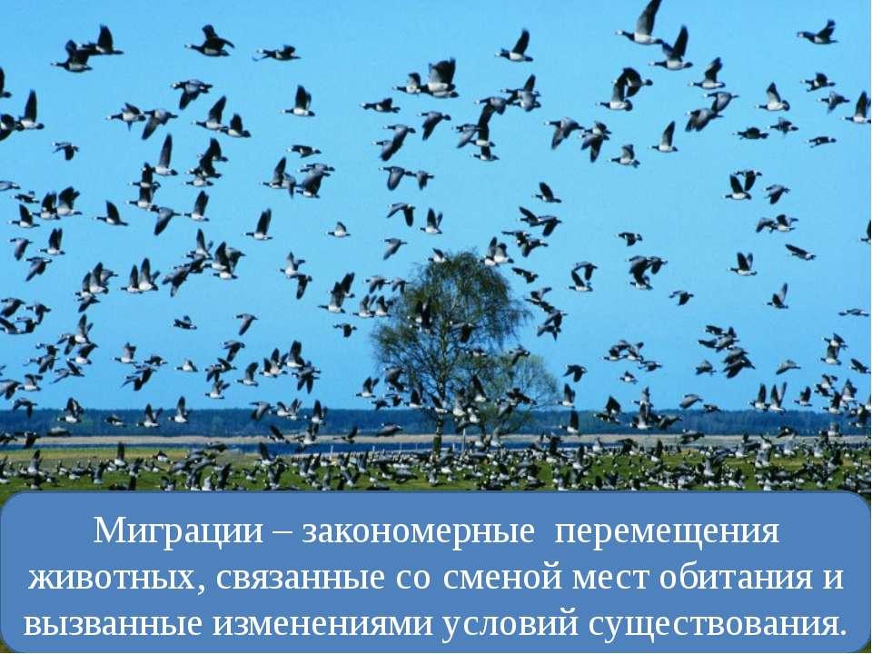 Миграции – закономерные перемещения животных, связанные со сменой мест обитан...