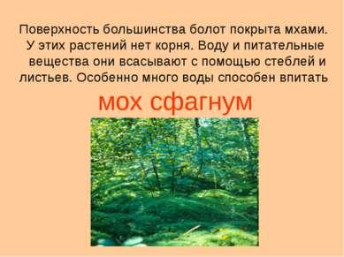 Поверхность большинства болот покрыта мхами. У этих растений нет корня. Воду ...