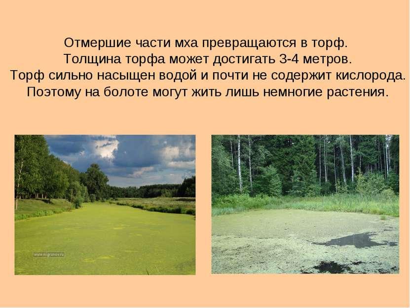 Отмершие части мха превращаются в торф. Толщина торфа может достигать 3-4 мет...
