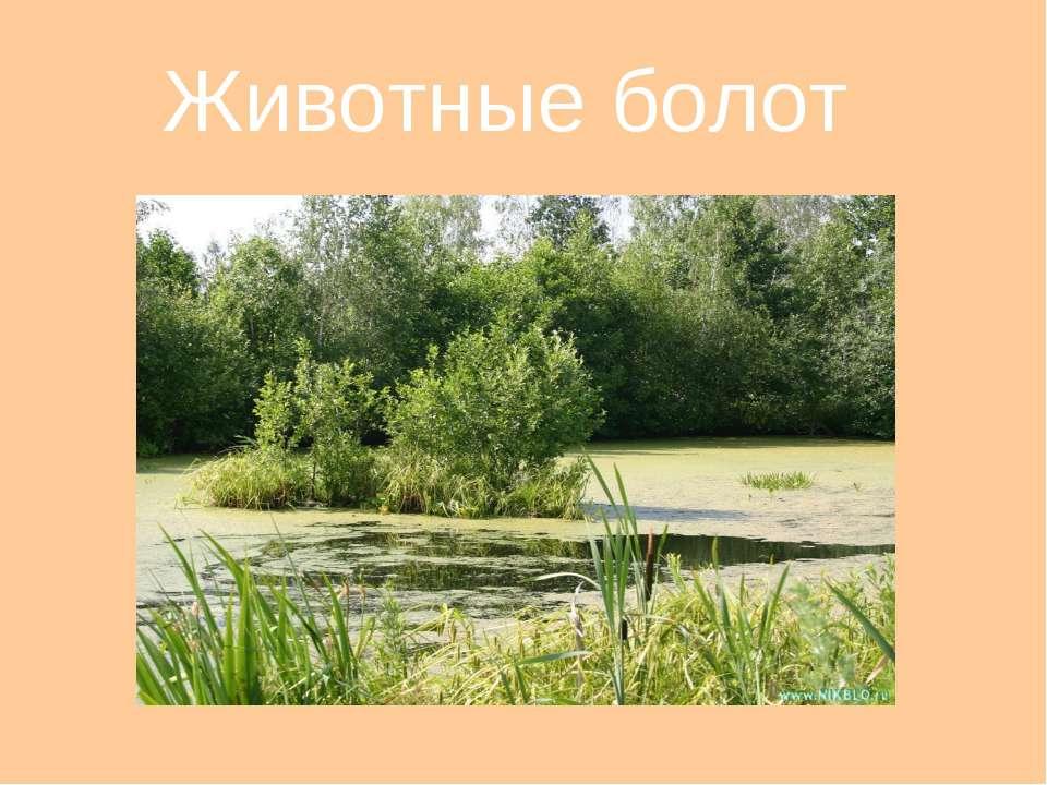 Животные болот