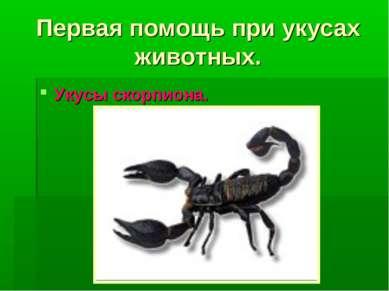 Первая помощь при укусах животных. Укусы скорпиона.