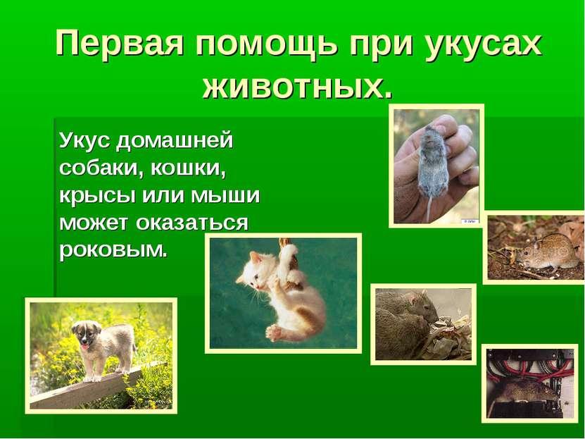 Первая помощь при укусах животных. Укус домашней собаки, кошки, крысы или мыш...