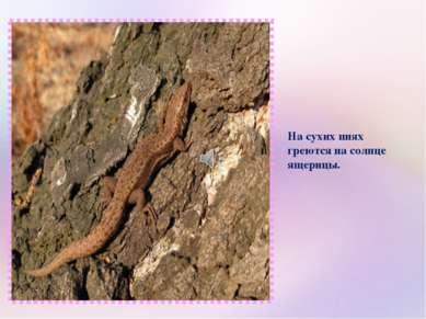 На сухих пнях греются на солнце ящерицы.