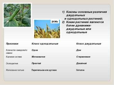 Каковы основные различия двудольных и однодольных растений; Какие растения яв...